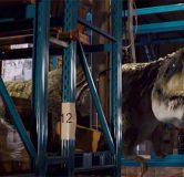 primeval-new-world-Albertosaurus
